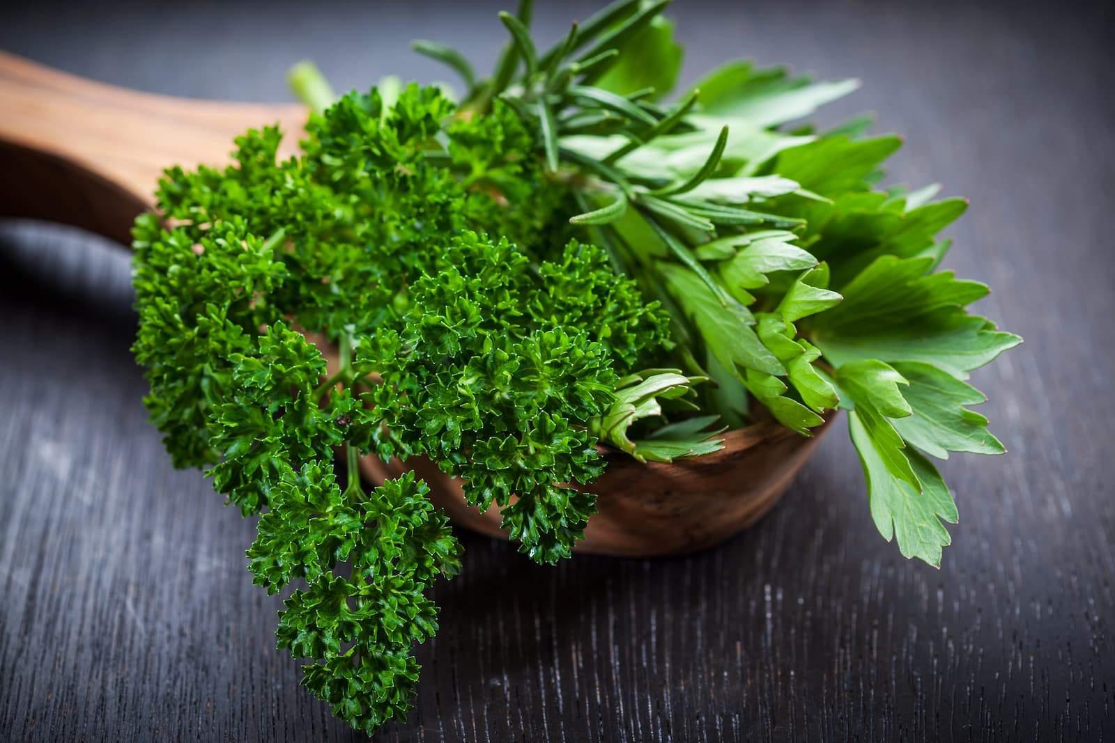 Ngò tây là một loại rau gia vị chứa nhiều vitamin C, collagen và Vitamin K